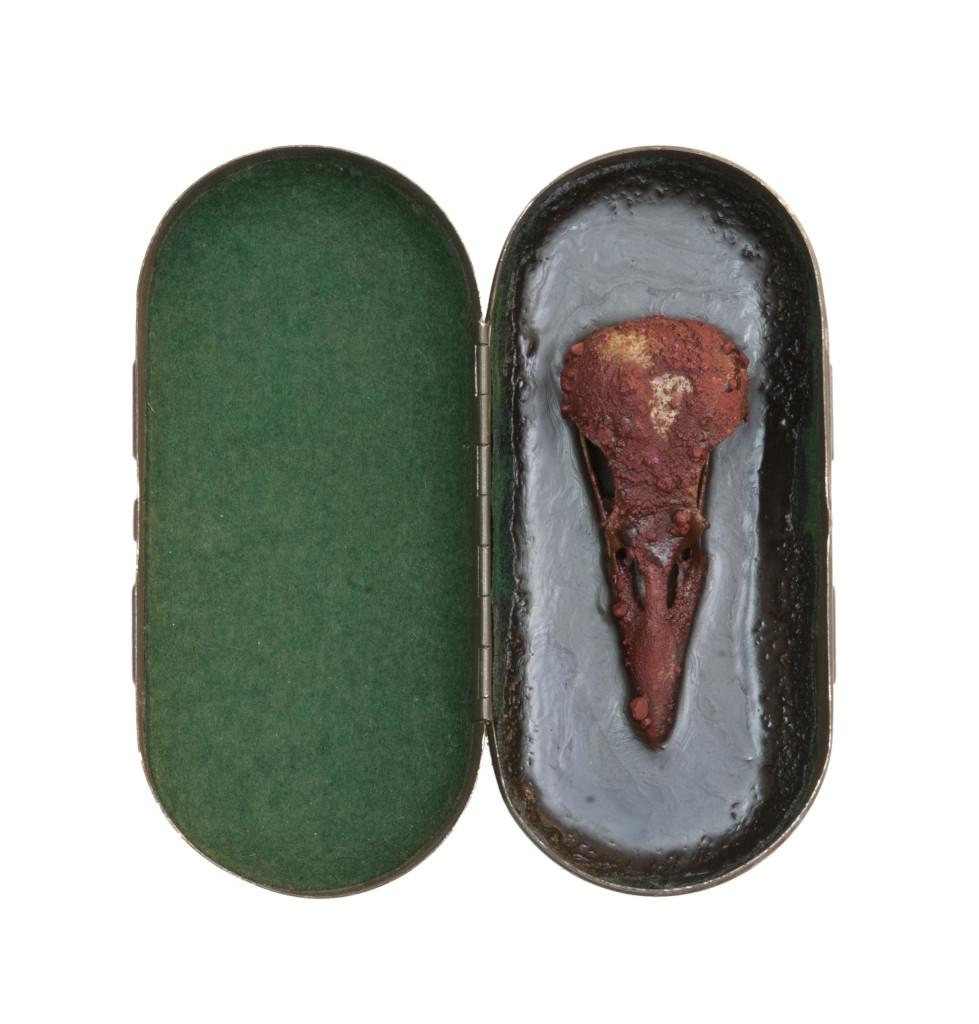 Saikuru VI, 2013, stalen doos, schedel, pigment, was 14x14x5